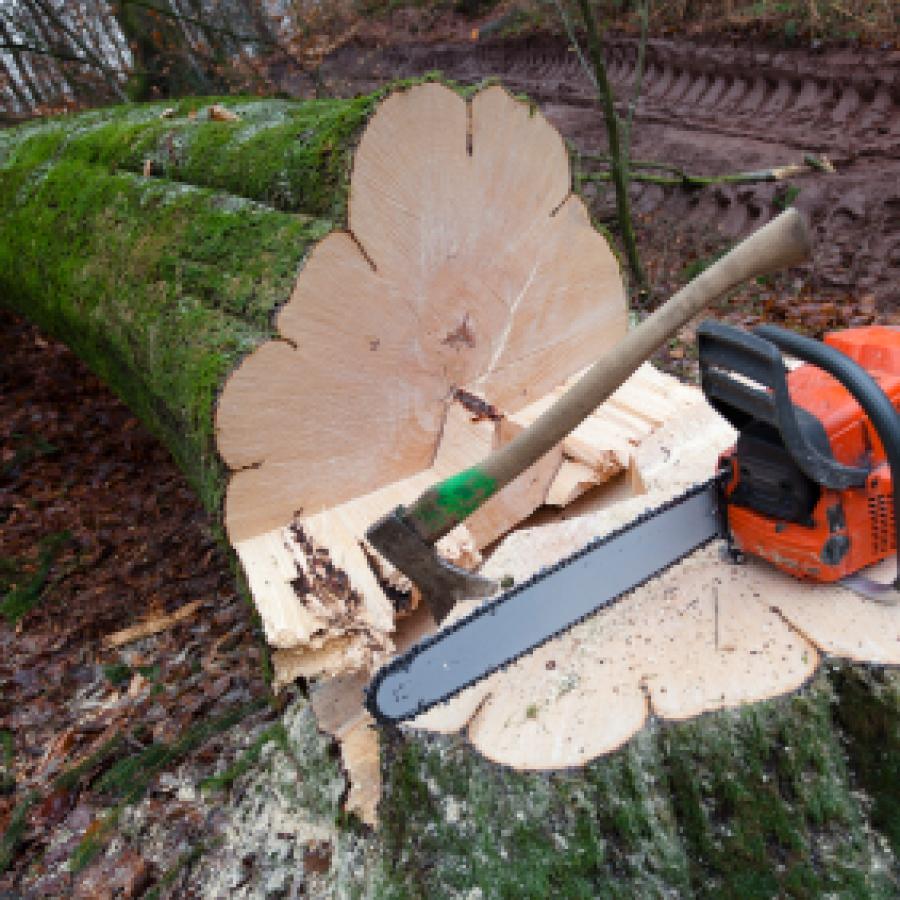 Fällarbeiten Baum Fällung